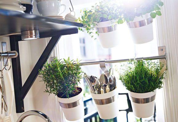 Hierbas y plantas arom ticas en tu cocina el rinc n de sonia for Plantas aromaticas en macetas